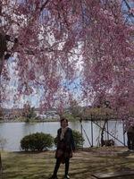 '130503毛越寺しだれ桜.jpg